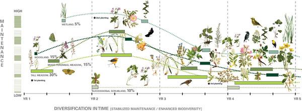 High Line Ecology Emergence