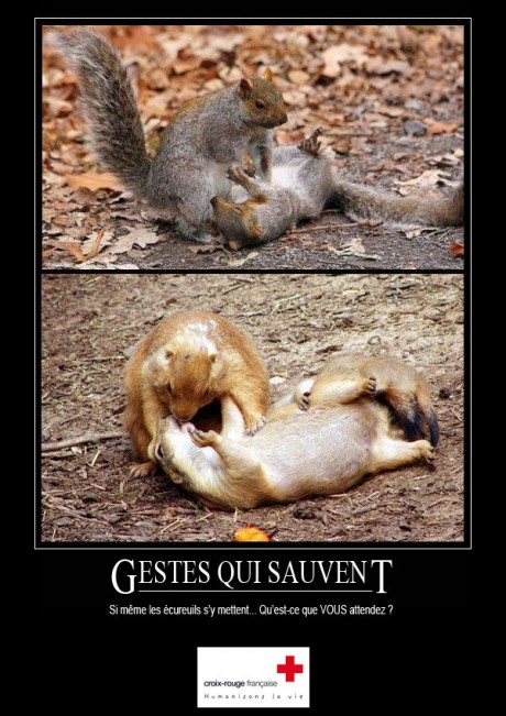 Squirrel CPR